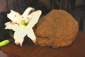 Image of lily and rock
